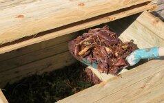Kompostavimo žiemą gudrybės