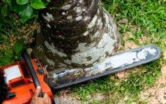 Ar galite nupjauti medį savo teritorijoje?