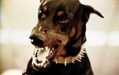 Agresyvų šunį teko nušauti policijos pareigūnui