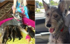 Kalytės šeima išgelbėta: gyvūno pasitikėjimas žmogumi stebina