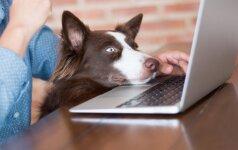 Balandžio 24-oji: ar bendradarbiai laukia šuns?