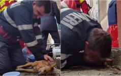 Nufilmuotas didvyriškas poelgis: dirbtinis kvėpavimas išgelbėjo šunį