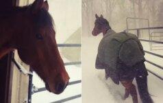 Internautai leipsta juokais: kumelaičių reakcija į sniegą pasako viską