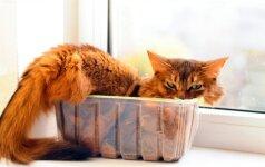 Tik katinai taip sugeba: keisčiausios vietos miegui