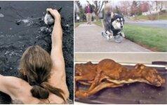 Be galo jautrios istorijos: iš mirties gniaužtų išgelbėti gyvūnai