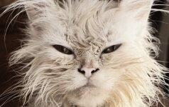 Kodėl katė nekenčia naujokų?