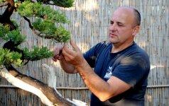 Bonsai auginimas: iš ko, kaip ir kodėl