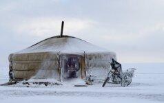 Mongolija susižavėjęs keliautojas: nustebino, kad gyvuliai stepėse suvarinėjami motociklais