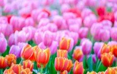 Astrologės Lolitos prognozė kovo 20 d.: proga atgimti