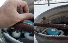 Paukštelio gelbėjimo operacija: prišalusį vargšelį pavyko išvaduoti