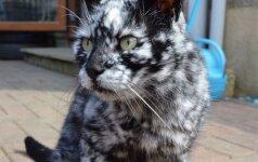Tokio neįprasto katės kailio tikriausiai dar nematėte