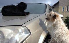 Klaipėdoje naikinamas mokestis už šunis ir kates