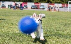 Specialistai paaiškina: kodėl šunims taip svarbu žaidimai