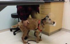 10 milijonų peržiūrų: aklas šunelis vėl pamato savo šeimininkus