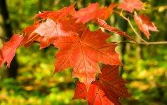 Astrologės Lolitos prognozė spalio 27 d.: naujos pradžios diena