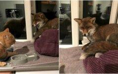 Katino guolyje rado įsibrovėlį: nekviestas, bet tikras gražuolis