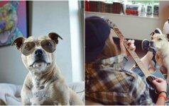 Pitbulis per plauką išvengė tragedijos: gyvūnui atsipalaiduoti padeda šeimininko muzika