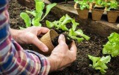 9 patarimai įrengiant savo daržą