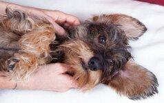 Šunų simptomai, į kuriuos negalima numoti ranka