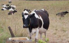 Ūkininkų pieno ir medaus mėgėjai turėtų žinoti vieną svarbų dalyką