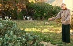 Keiptauno gyventojai stojo į kovą su pingvinais