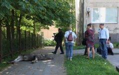 Kodėl nepavyko išgelbėti Vilniuje besiblaškiusio briedžio?