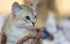 Mažiausios pasaulio veislės katę auginanti lietuvė: jos buvo naikinamos kaip parazitai