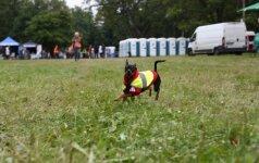 Specialioje rungtyje šunys ir pralinksmino, ir pademonstravo savo sugebėjimus