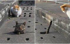 Iš skylės kyšanti uodega sužadino smalsumą: rado visą kačių būrį