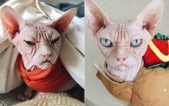 Iškalbinga katino išraiška: tokio pikto gyvūno turbūt dar nematėte
