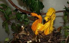Kalėdiniai žaisliukai iš dekoratyvinių moliūgų ir ne tik