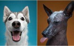 Skirtingos šunų nuotaikos: neįtikėtina, kokie jie panašūs į žmones