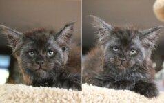Internautai negali atsistebėti: rado katytę, kurios žvilgsnis panašus į žmogaus