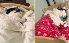 Kankinta katytė sulaukė atpildo: miega jai sukaltoje lovelėje