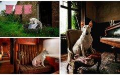 Šuo modelis: savo darbą jis atlieka meistriškai