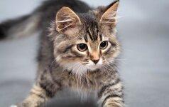 Beglobį kačiuką priglaudė net jo nematę – išsirinko telefonu