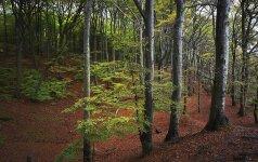 Lietuviai negali be miško