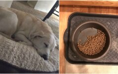 Jaudinanti gyvūnų draugystė: dalį maisto vis dar palieka nebegyvam bičiuliui