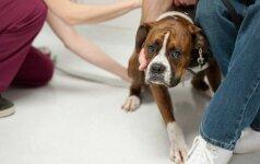 Vilnietis prašo pagalbos: grįžęs Naujųjų rytą namie radau paklaikusį šunį