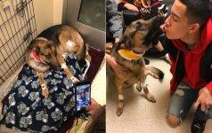 Tikras didvyris: šuo atrėmė nusikaltėlių kulkas ir išgelbėjo šeimininką