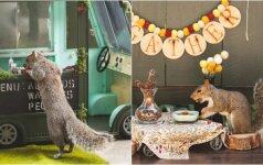 Kvietimo norėtų kiekvienas: fotografė rengia vakarėlius voverėms