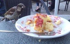 Žvirbliai baigė laikytis dietos – slėpkite tortus!