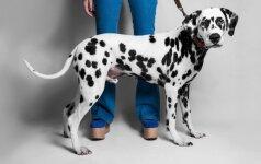 Kodėl šuo imituoja lytinį aktą su jūsų koja