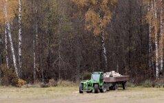 Lietuvoje ketinama išparduoti 135 tūkst. ha rezervinio miško