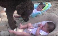 Pamatykite: šuo niekaip nesupranta, kodėl kūdikiai nenori su juo žaisti