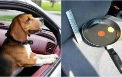 Daugiau nepaliksite šuns automobilyje: eksperimentas su kiaušiniu šokiruoja