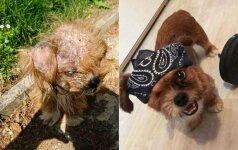 Neįtikėtina, kad tai tas pats šuo: moters rūpestis jį pakeitė neatpažįstamai