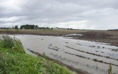 Nepamena tokių blogų metų: sušlapęs derlius graso nuostoliais