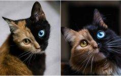 Pasaulį stebina neįprasta katės išvaizda: turi du skirtingus veidus