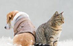 Su šiomis katėmis geriau nejuokauti